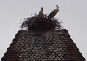 174 storks