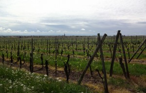 174 vineyards
